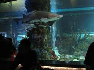 Shark tank at Dancing with the Sharks, Tiandi, Chongqing