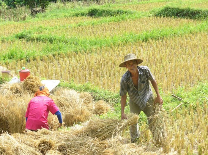 A farmer outside of Chiang Mai in northern Thailand
