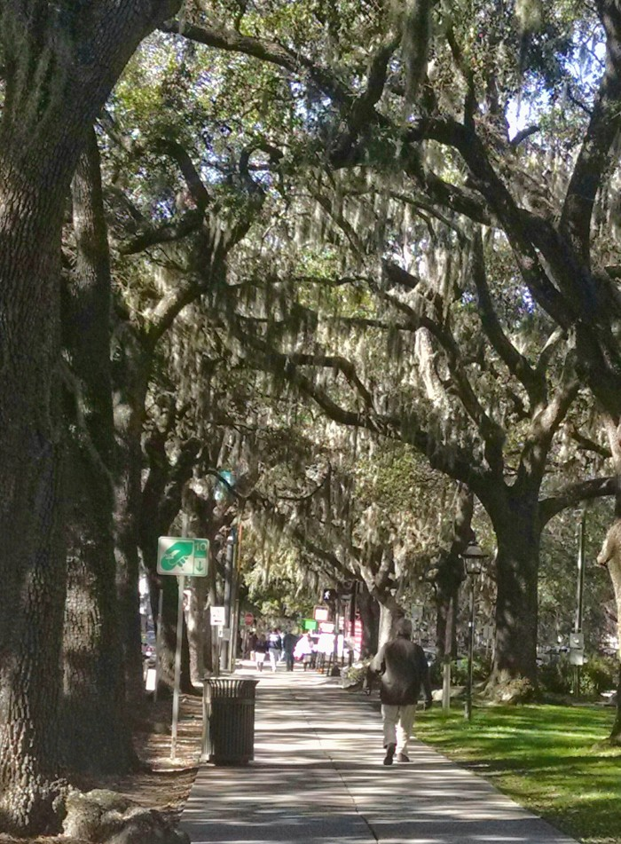 Reminiscent of a begotten age, the Spanish moss hangs from trees along the river front in Savannah.